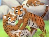 Tiger Nursery