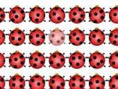 Ladybug Pairs