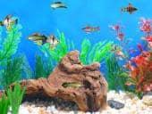 Fish Tycoon 3
