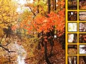 Hidden Spots Trees